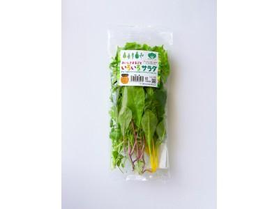 植物工場野菜のみで作られた、全く新しいサラダキット きらきらベジ「おいしさまるごと いろいろサラダ」発売のご案内