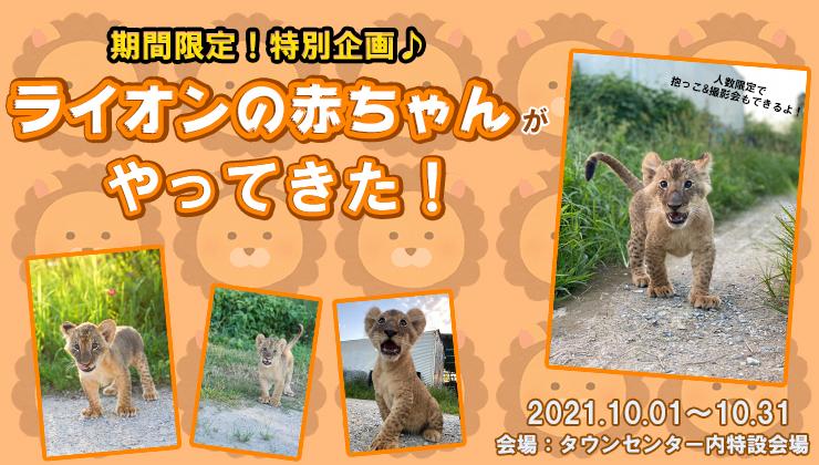 ライオンの赤ちゃんが那須ハイランドパークにやってくる!!