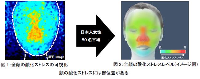資生堂、バイオフォトン測定により顔の酸化ストレスの部位差を発見 ― 酸化ストレスレベルは加齢・シワと密接に関係 ―