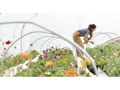 全国の花き生産者を応援するフラワーイベントを開催。国産の花をふんだんに使用したイベントで、フラワーロスの軽減と花の需要拡大を図る。