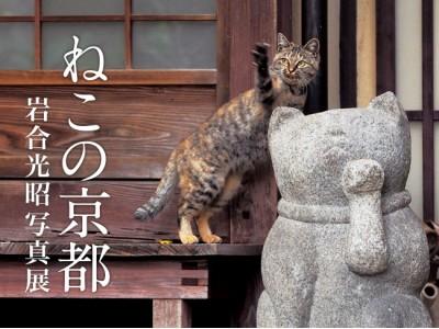動物写真家 岩合光昭の新作写真展「ねこの京都」が2017年5月に開催!
