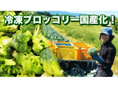 コロナに負けない!家庭消費向け「国産冷凍ブロッコリー」の商品開発。若手農業者への応援も兼ねたクラウドファンディングプロジェクトがスタート!