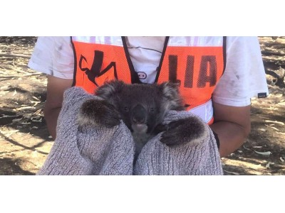 オーストラリア森林火災における動物救援活動 2月10日・11日の2日間、LUSH 新宿店にてチャリティイベント開催