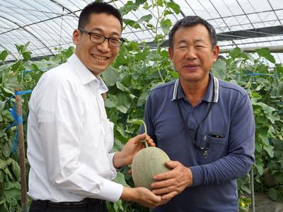 豊洲市場ドットコム初夏イチオシのメロンはこれ!熊本県産「肥後グリーン」を全国の消費者へ直接、届けます