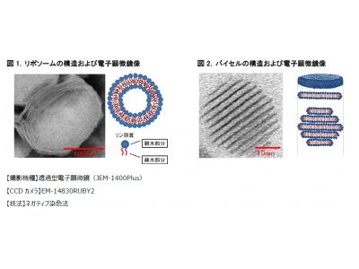 マンダム、皮膚浸透性が高い微細カプセル製剤「バイセル」の開発に成功~より機能性の高いスキンケア製品の開発を目指して~