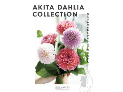 秋田市産ダリア×日比谷花壇タイアップキャンペーン「AKITA DAHLIA COLLECTION」を開催します!