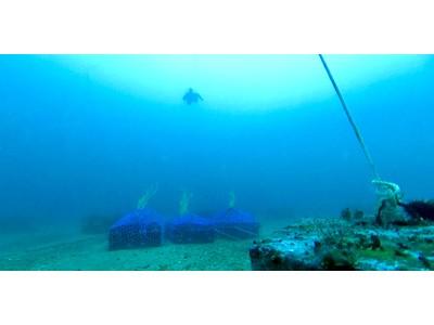好みのお酒沈めます!「海底熟成ができる権利クラウドファンディング」開始3日で目標金額達成・・・現在目標達成率300%