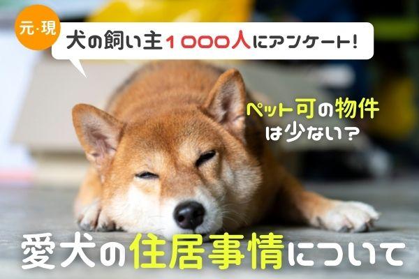 愛犬の住居事情を徹底調査!ペット可の物件が少なすぎるとの声も…【犬の飼い主1000人にアンケート】 画像