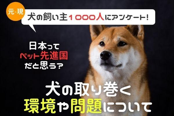 日本は犬に優しい国?殺処分をどう思う?犬を取り巻く環境や問題を徹底調査!【犬の飼い主1000人にアン... 画像