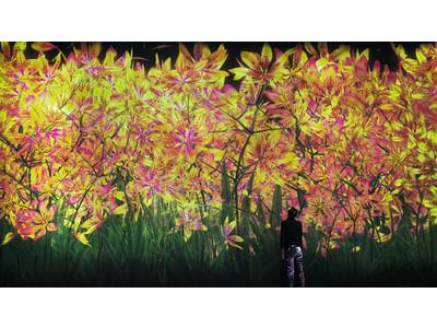 東京・お台場「チームラボボーダレス」が【秋】の景色に。季節とともに移ろう作品群に、秋の花々や黄金色の稲穂が登場。ランプの作品は、秋の色で輝く「山の紅葉」に