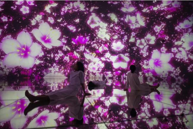 「チームラボプラネッツ」(東京・豊洲)の作品が、春限定で桜が広がる空間に変化。巨大なドーム空間いっぱいに桜が咲き渡り、無...