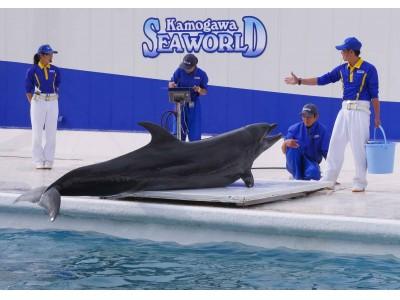 動物ごとに異なる体重測定の様子に驚きの声も!測定結果を発表!鴨川シーワールド「海の動物 公開体重測定」