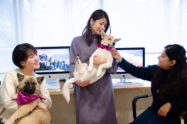 「飼いたくても飼えない」を解消。『保護犬の犬材派遣サービス』