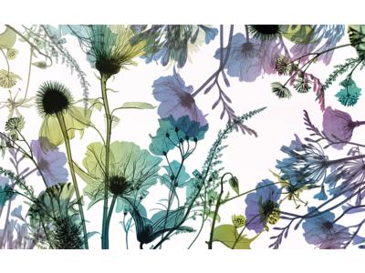 花のレントゲン写真で作るフラワーパターンのデザインブランド「memorif.」発表のお知らせ