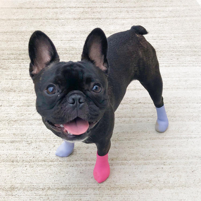 愛犬の肉球保護に!犬用靴「パウテクト」レインブーツタイプから気分が上がる新色発売!