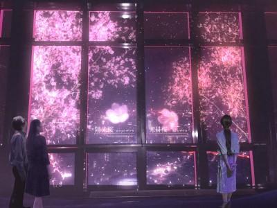 東京タワーの夜景に花咲く、ネイキッドの桜