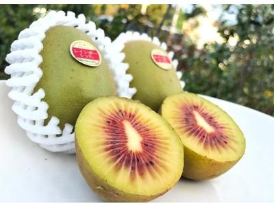 高い糖度の甘味が大人気!キウイフルーツ「レインボーレッド」が産地直送通販サイト「JAタウン」で販売開始!