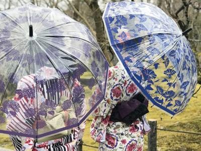 雨の中、シュパッと傘さすあなたは、傘美人。