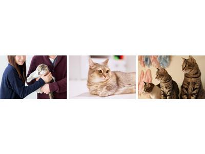 猫好き婚活×保護猫活動「ねこらぶ」をリリースいたしました