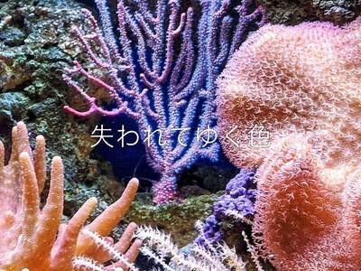 サステナブルファッションブランド『エコアルフ』 2021年春夏テーマ「LOST COLORS」 商品を3月中旬より発売。珊瑚のピンク・イエロー・ブルーなど失われつつある海にある美しい色を商品で表現
