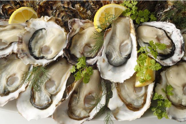 いよいよ岩牡蠣も最盛期!ランチから生牡蠣がお得!真牡蠣プレート半額